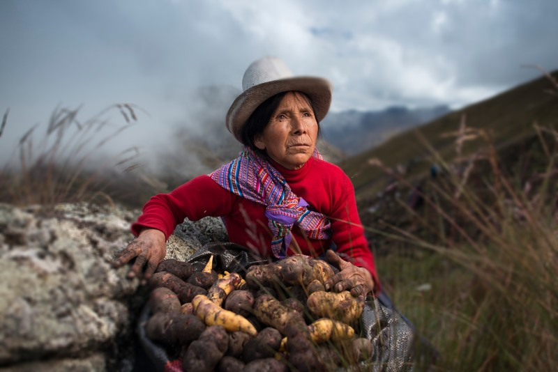 Woman with native potatoes